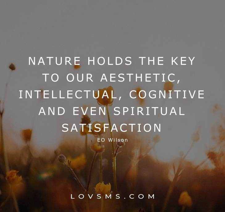 Nature Healing Quotes